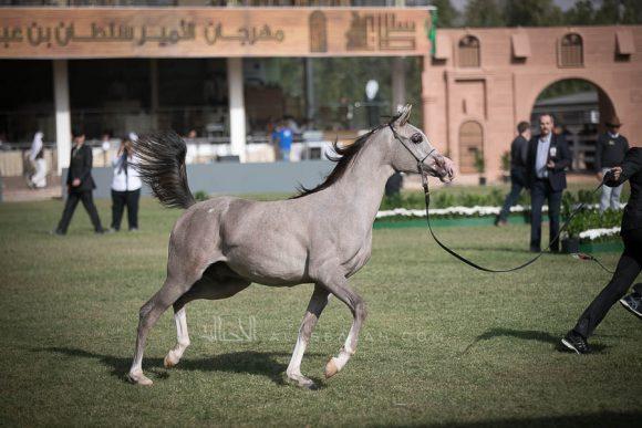 الأمير سلطان الخالديةISSS2533