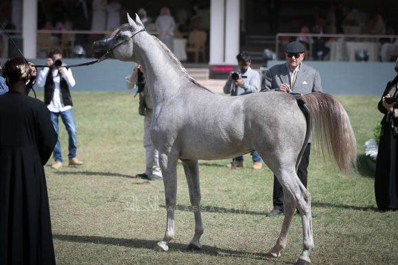 الأمير سلطان الخالديةISSS2697
