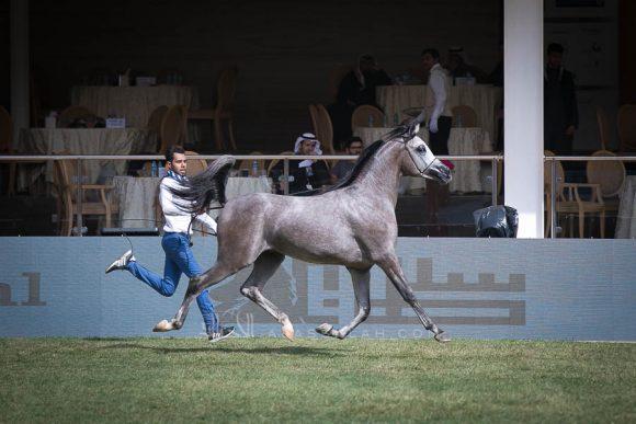 الأمير سلطان الخالديةISSS2725