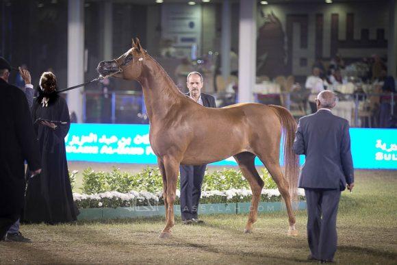 الأمير سلطان الخالديةISSS3000