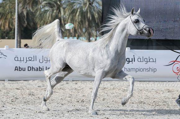 سيطرة إماراتية فريدة .. على القاب دولية أبوظبي 2019