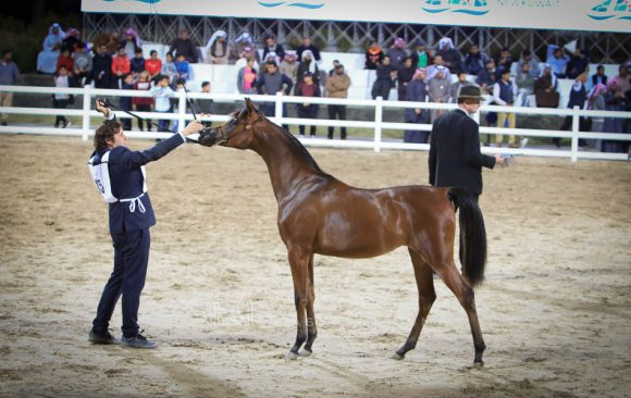 Gold filly1