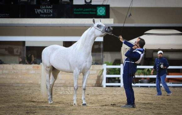 gold mare