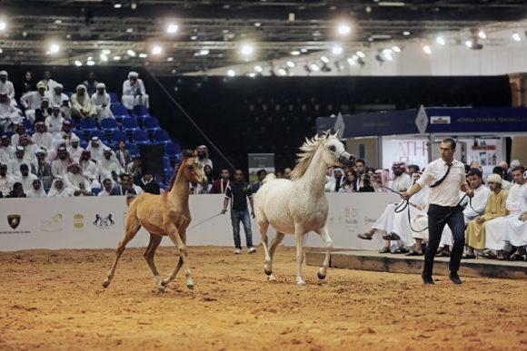 """4.25 مليون مجموع مبيعات مزاد لؤلؤة دبي 2019 و""""دي عزيزة"""" تحقق الأغلى سعراً بـ 280 ألف درهم"""