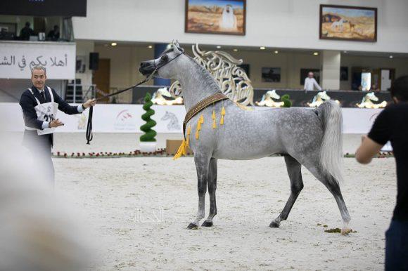 سانداون كي ايه (كيو ار مارك x ال سيرنيلا) مربط الصقران- الإمارات