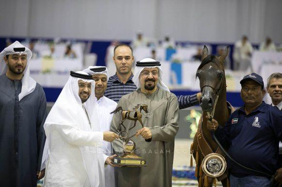 فام دوناتيلا (دومنيك ام  xدي كريستال مون) مربط الجواهر – الإمارات. Fame Donatella (Dominic M x D Crystal Moon) Al Jawaher Arabian Horse Stud- UAE