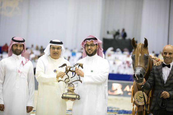ديلايت ديفا ار بي (عجمان مونسيون  xهونيز ديلايت ار بي) مربط السيد – السعودية. Delights Divah RB (Ajman Monsicione x Honeys Delight RB) Alsayed Arabian Horse Stud- KSA