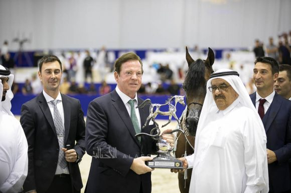 كيو آر مارك (مروان الشقب  xسويت دريمز) مربط نوك – بلجيكا. QR Marc (Marwan Al Shaqab x Swete Dreams) Knocke Arabians-BE