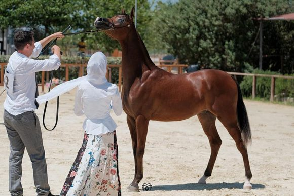 مربط دبي يواصل مسيرته الذهبية لموسم ٢٠١٩ في إيطاليا