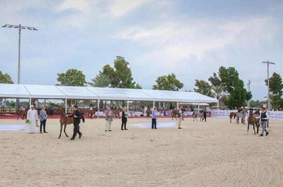 انطلاق بطولة الإمارات لمربي الخيول العربية 2019 في ابوظبي