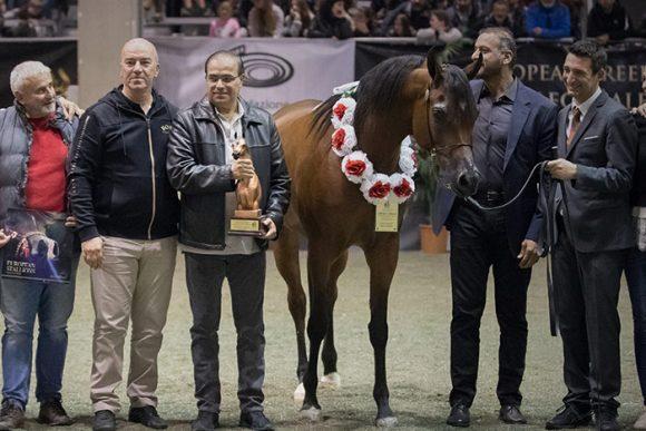 «دبي» يحصد 3 القاب ذهبية في بطولة حلم فيرونا الإيطالية للخيول العربية 2019