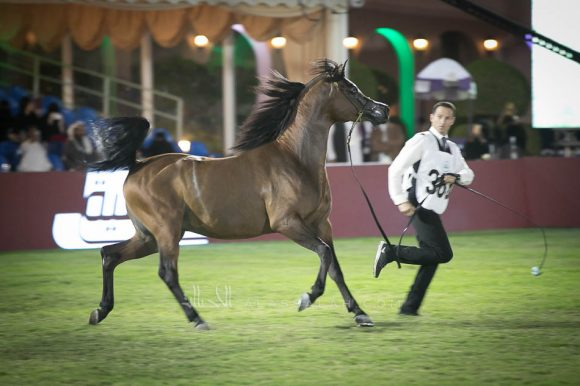 صور مقتطفة من اليوم الثالث من بطولة مركز الملك عبدالعزيز ٢٠١٩ للخيل العربية الأصيلة