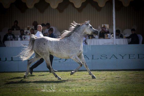 برنامج بطولة مركز الملك عبدالعزيز الدولية الرابعة 2019
