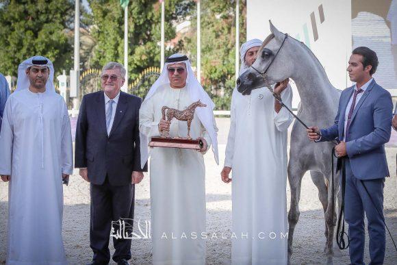 «دبي» يحقق ٦ القاب في بطولة أبوظبي للخيول العربية 2020