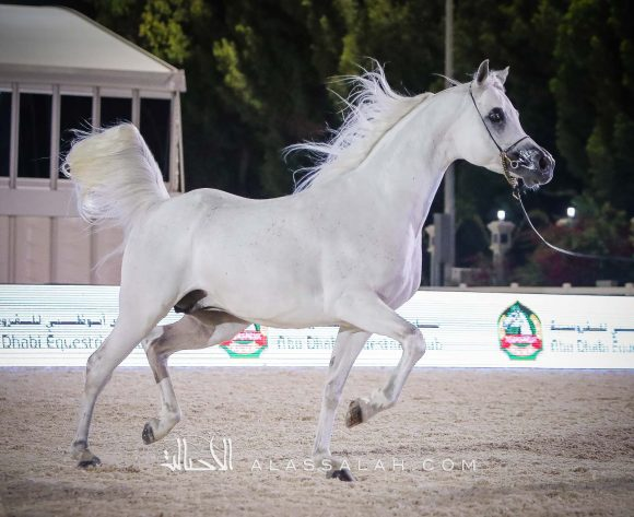 مسرور البداير يحقق فضية الفحول في بطولة أبوظبي 2020