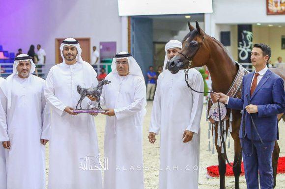 دي سينية (اف ايه الرشيم x رويال أميرة) مربط دبي – الإمارات.