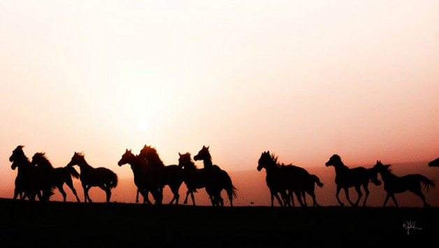 في مصر: اتصالات بين «الزراعة» و«الاتحاد الأوروبي» لإلغاء حظر تصدير الخيول