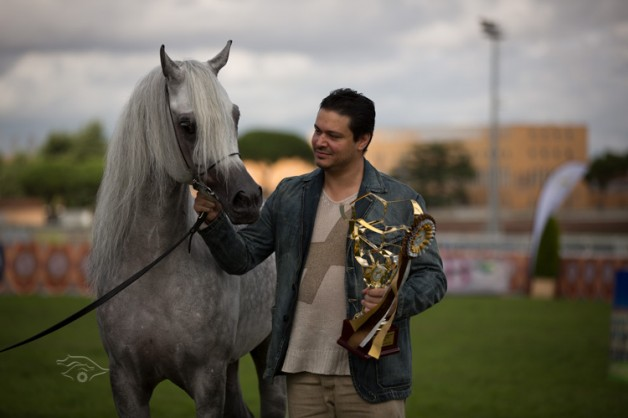 نتائج بطولة العالم للخيل المصرية بروما سيطرة عربية تامة واكتساح سعودي إماراتي قطري مصري