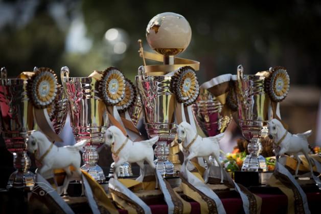 مقتطفات من اليوم الأول لبطولة العالم لجمال الخيل العربية السلالة المصرية روما 2013
