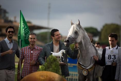 مقتطفات من اليوم الختامي لبطولة العالم لجمال الخيل العربية السلالة المصرية روما 2013