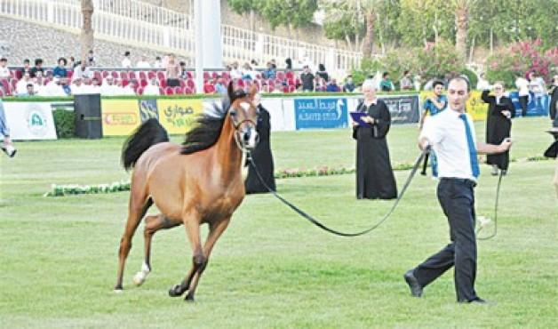 نتائج بطولة مكة المكرمة الرابع لجمال الخيل العربية الأصيلة ٢٠١٣ (B) بتنظيم مزرعة الصواري