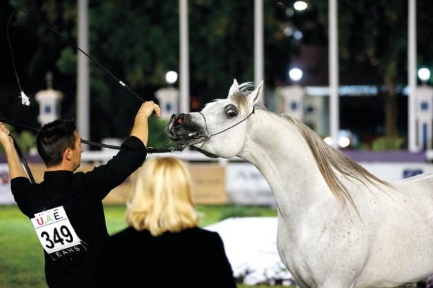 عمار النعيمي: حققنا هدفنا في بطولة جمال الخيول