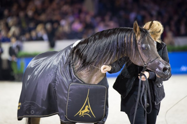 THE BEST DAM TROPHY in Paris 2015 World Arabian Horse Championship