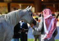 تأجيل بطولة الإنتاج المحلي الخامسة لجمال الخيل العربية الأصيلة ٢٠١٦ بالطائف