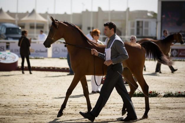 النتائج في بطولة قطر الدولية ٢٠١٤: تفوق لـ «الشقب» و «الخالدية » و «عجمان» و «المعود» و «السيد» في اليوم الأول