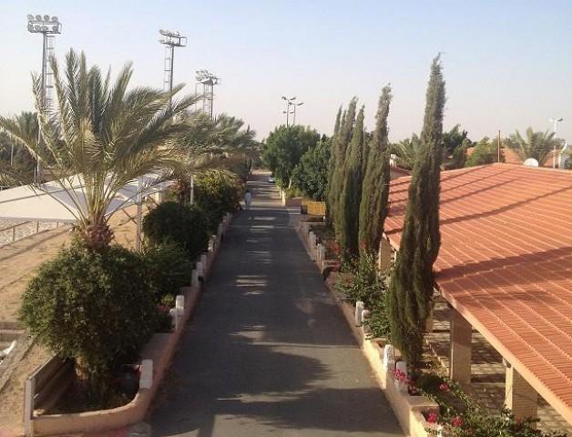 مركز المسرة الدولي بالطائف يستضيف بطولة كأس المنتجين لجمال الخيل العربية الأصيلة ٢٠١٤
