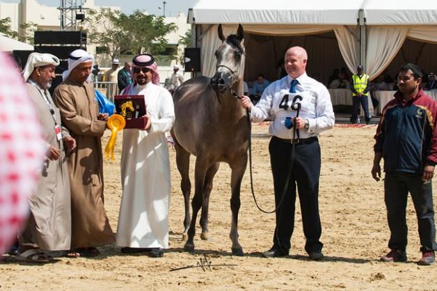 «الســيد» و «المعود» و «عجمان» و «الشقب» و «الخالدية» و «عذبه» أبطال بطولة قطر الدولية ٢٠١٤ للجمال