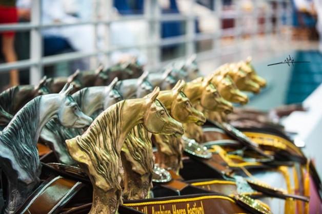 بطولة الشارقة المحلية للجواد العربي تنطلق غداً