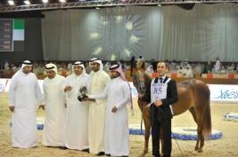 نتائج اليوم الأول من بطولة دبي الدولية لجمال الجواد العربي الأكثر إثارة!