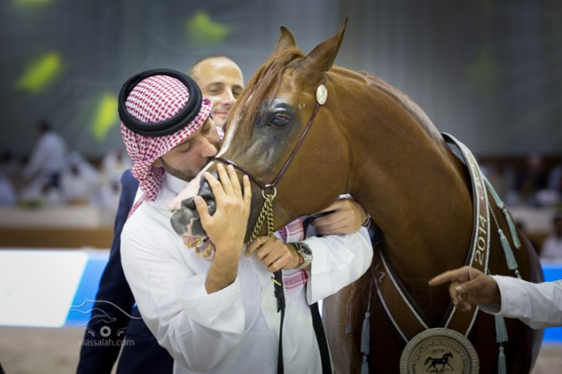 Photo gallery from the finals of Dubai International arabian horses show 2014