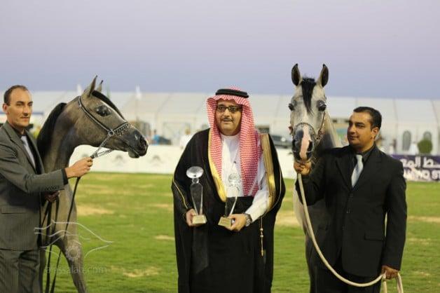 (عذبة) و (البراحة) و (السديري) و (التميمي) أبطال السلالة السعودية ببطولة الأحساء ٢٠١٤