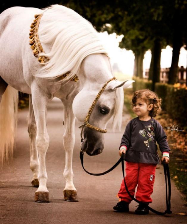 الخيل والفروسية تقلل التوتر لدى الأطفال والمراهقين
