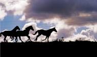 «تربية الخيول» توصي بالاهتمام بالجينات والسلالات والتغذية