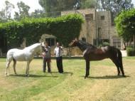 مدرسة لمهن الخيل ومستشفى دولي لرعاية الأفراس.. ضمن خطة نقل محطة الزهراء للخيول
