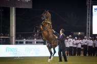 مزرعة الخالدية تتيح التشبية مجاناً من «١٩» فحلاً من الخيول العربية لموسم ٢٠١٦