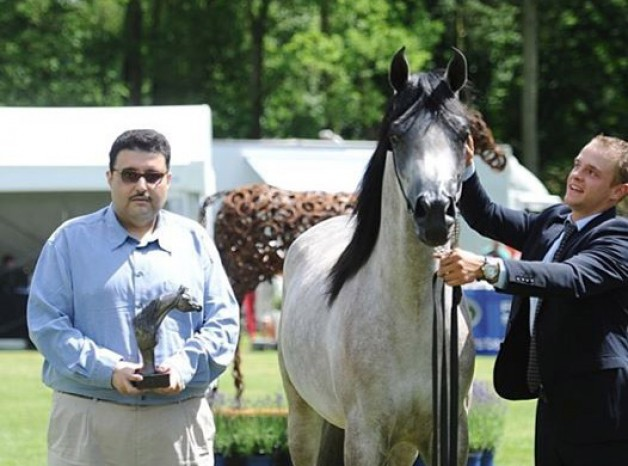 (عذبة) و (المحمدية) يختالون بذهب بلجيكا ببطولة «بروج» الدولية لجمال الخيل العربية الأصيلة