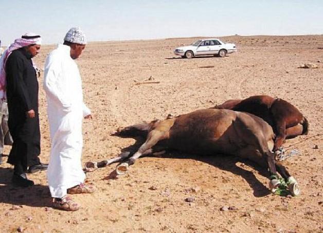 «الزراعة» تواجه تفاقم «نفوق الخيول» بجولات تفتيشية على نوادي الفروسية