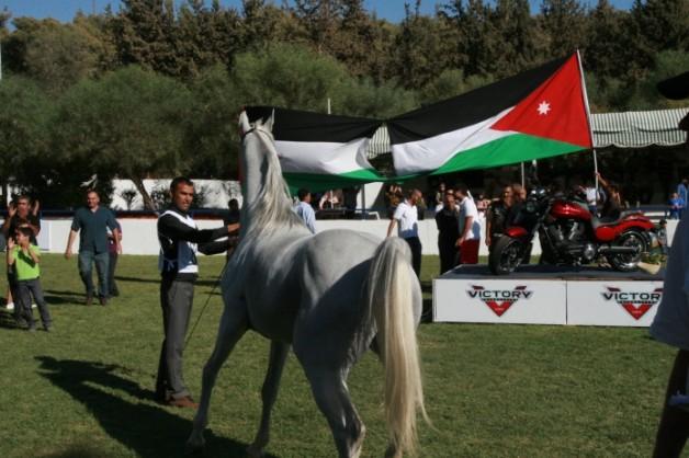 بحث تعزيز بيئة الخيول والمبادلات التجارية في الاردن