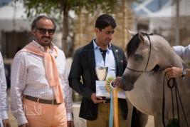 المرابط الخليجية «بإنتاجها» تستحوذ على جوائز بطولة منتون ٢٠١٤ لجمال الخيل العربية بفرنسا (صور و نتائج)