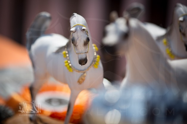 Photo gallery from the final day Menton Arabian Horses championship 2014