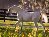 The Tale of a Horse – El Nabila B