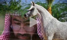 فيديو: الشيخ نبيل العوضي قصص رائعة عن الخيل