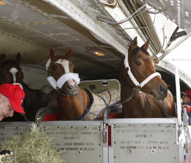 """الاتحاد للشحن يطلق خدمة """"سكاي ستابلز"""" لنقل الخيول جوا"""