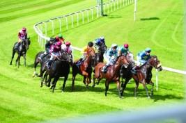 أقوى الخيول العربية تتنافس على كأس زايد في بلجيكا