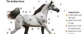 The Arabian horse CHART