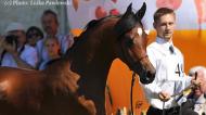 The Polish Arabian Junior Spring Show